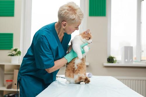 soins pour chat et chien
